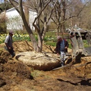 Tree & Shrub Removal Services
